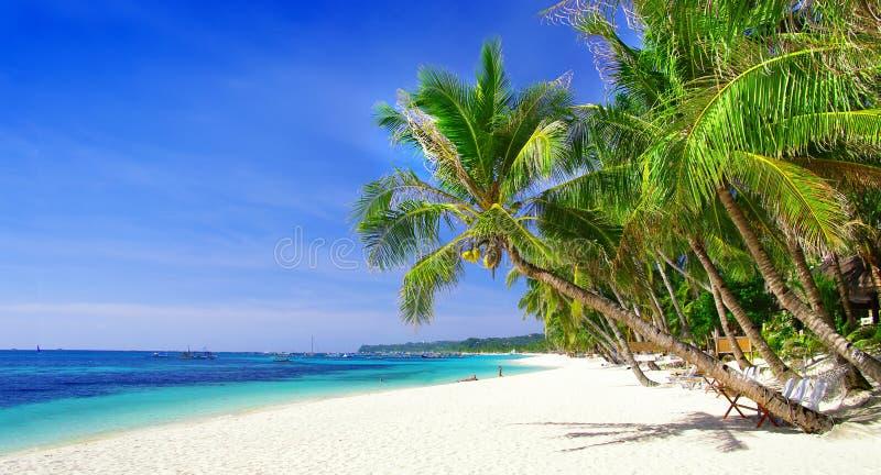 Tropiques purs photos libres de droits