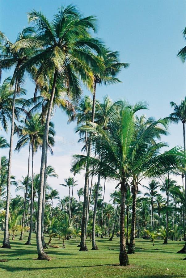 Tropisch royalty-vrije stock afbeelding