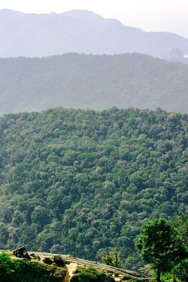 Tropisch bergen behandeld regenwoud met perspectiefmening stock afbeelding