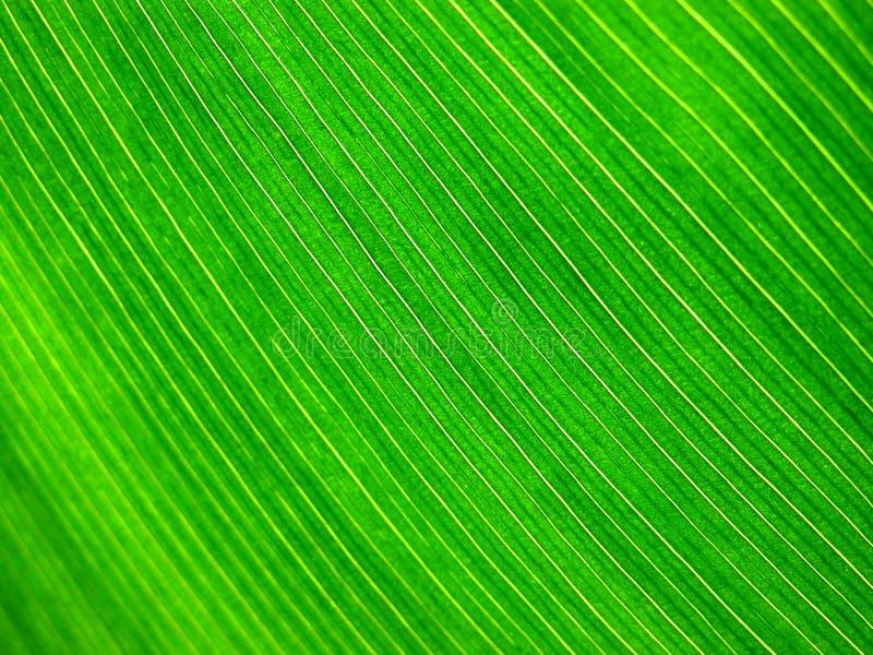 Tropisch blad royalty-vrije stock afbeelding