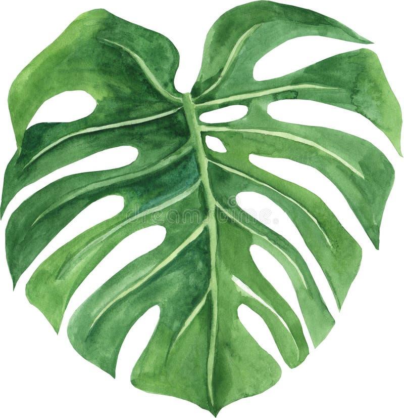 Tropisch blad van monstera Hand geschilderde die waterverfillustratie op witte achtergrond wordt ge?soleerd royalty-vrije illustratie