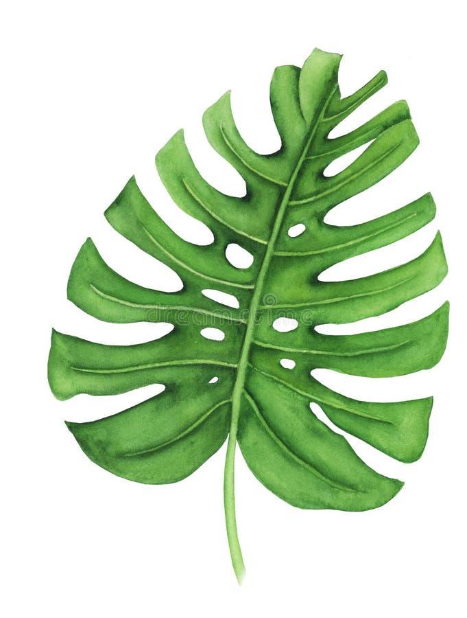 Tropisch blad van monstera, waterverf het schilderen Hand geschilderde die illustratie op witte achtergrond wordt geïsoleerd royalty-vrije illustratie