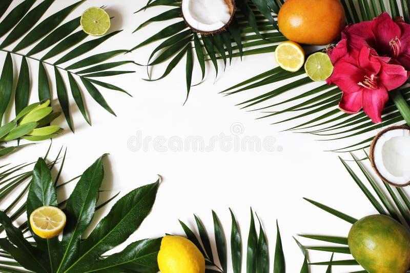 Tropisch bloemen en exotisch fruitkader, Webbanner De kokosnoot, de citroenen, de mango en de amaryllis bloeien op sterke drank p stock foto's