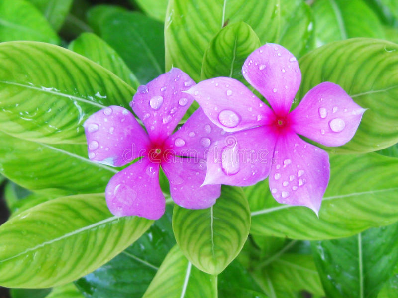 Tropisch-Blume stockfotografie