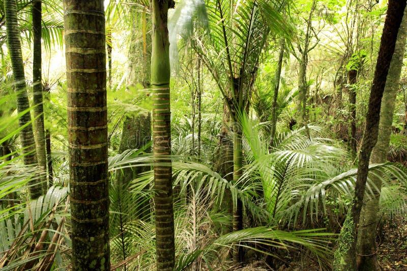 Tropisch bos royalty-vrije stock afbeelding