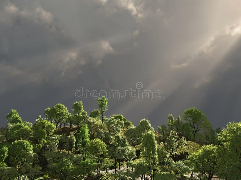 Tropisch bos met stralen van licht stock foto