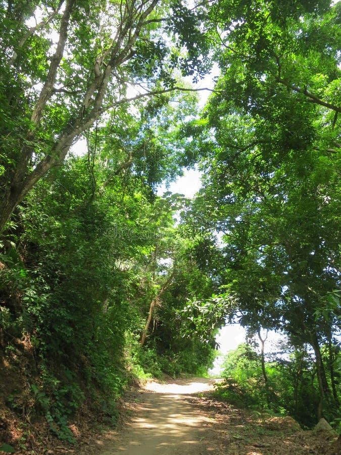 Tropisch bos Minca, Santa Marta, Colombia; Tropical forest at Mi. Nca, Santa Marta, Colombia royalty free stock photo