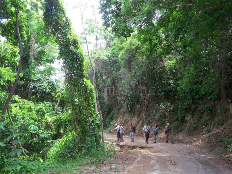 Tropisch bos Minca, Santa Marta, Colombia; Tropical forest at Mi. Vogelaars wandeld in tropisch bos bij Minca, Santa Marta, Colombia; Birdwatchers walking in stock photos