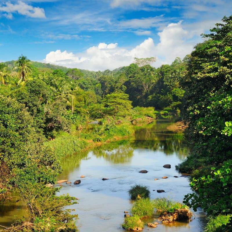 Tropisch bos op banken van rivier royalty-vrije stock fotografie