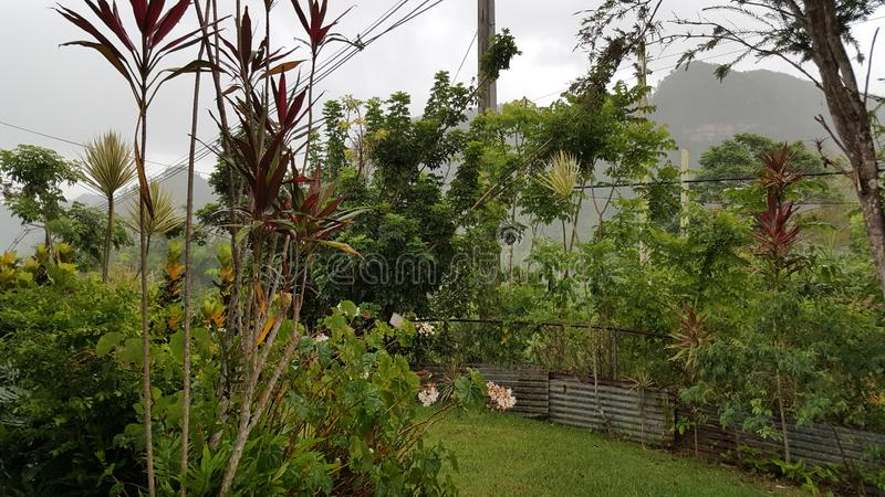 Tropisch bos in San Sebastian, Puerto Rico stock foto's