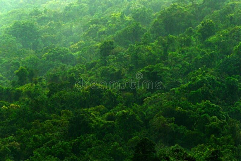 Tropisch bos tijdens regenachtige dag Groen wildernislandschap met regen en mist Bosheuvel met grote mooie boom in Santa Marta, C stock foto