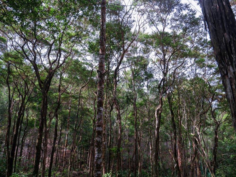Tropisch bos van Maleisië stock fotografie