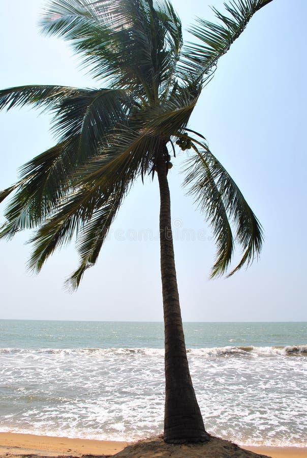 Tropisch eiland in de oceaan van Sri Lanka stock foto