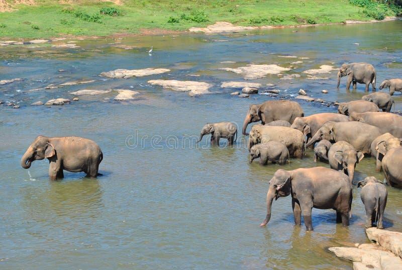 Tropisch eiland in de oceaan van Sri Lanka royalty-vrije stock foto