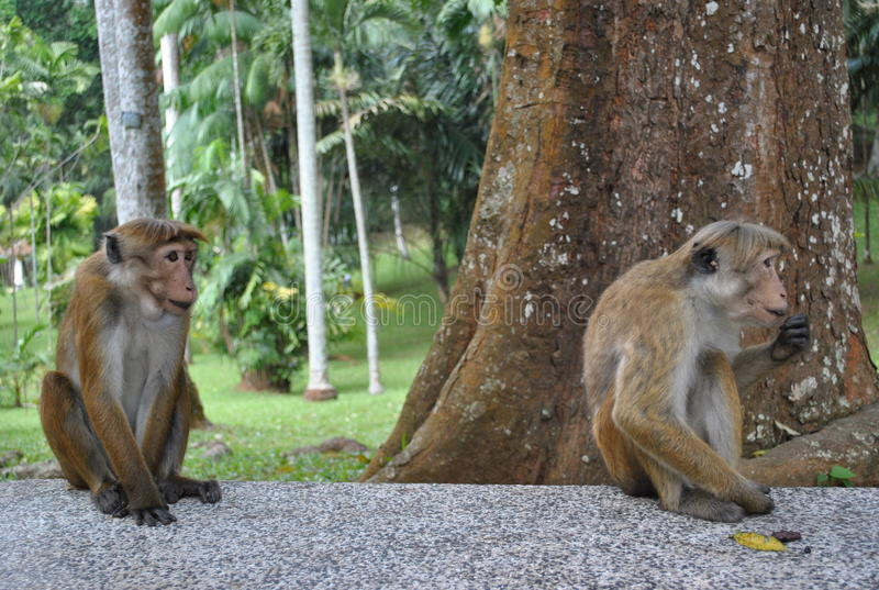 Tropisch eiland in de oceaan van Sri Lanka stock fotografie