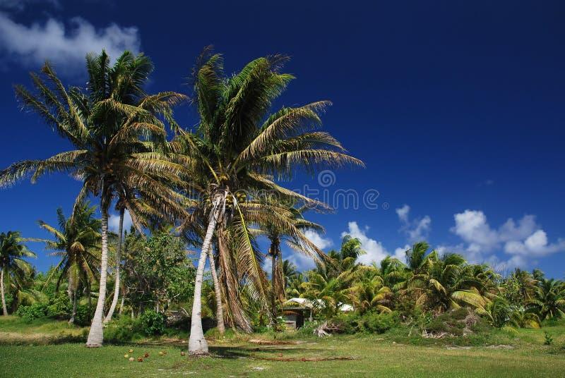 Tropisch Eiland Franse Polynesia royalty-vrije stock afbeeldingen