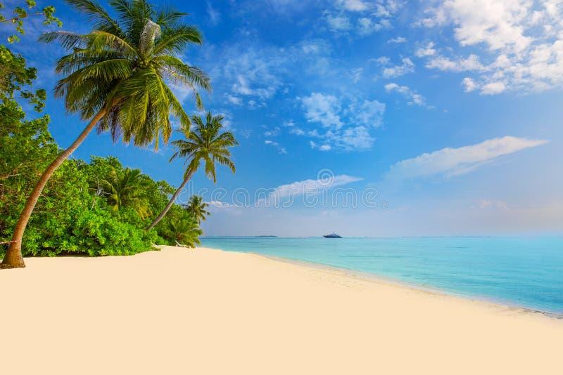 Tropisch eiland met zandig strand, palmen, overwater bungalow stock afbeelding