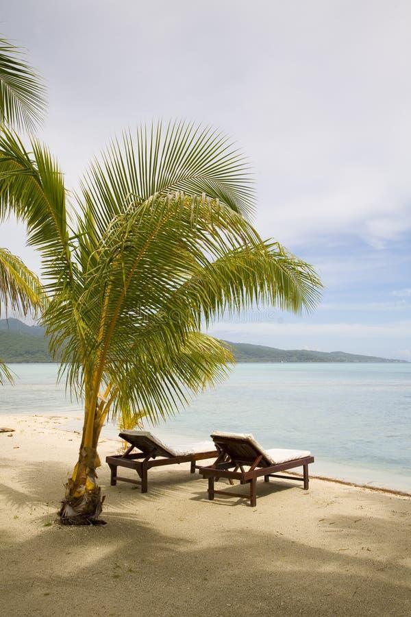 Tropisch exotisch strand royalty-vrije stock afbeeldingen