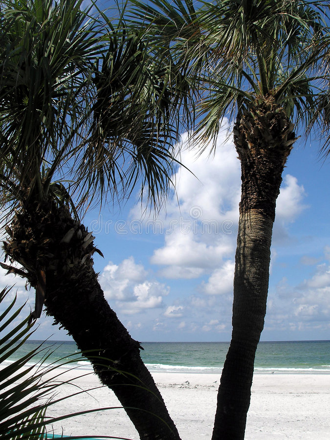 Tropisch Florida royalty-vrije stock foto's