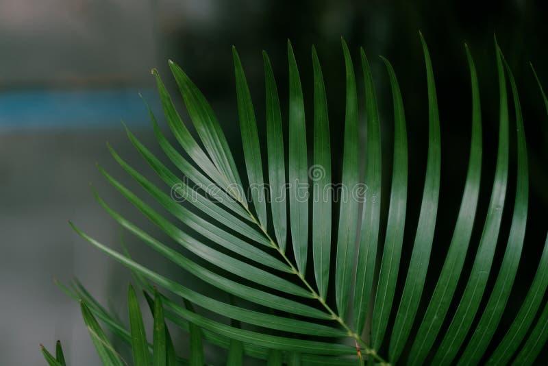 Tropisch groen blad in de zomer royalty-vrije stock fotografie