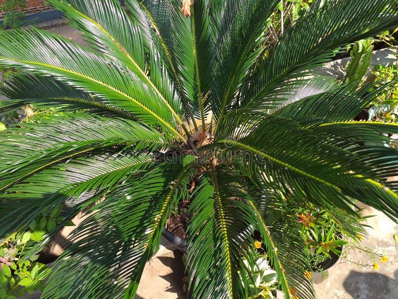 tropisch groen palmen zeldzaam bos stock fotografie