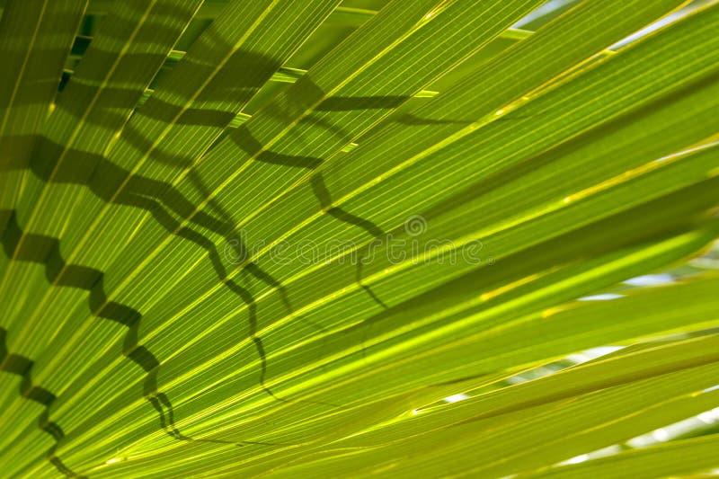 Tropisch helder palmblad in de zonnestralen, bloemen exotische patroonachtergrond royalty-vrije stock fotografie