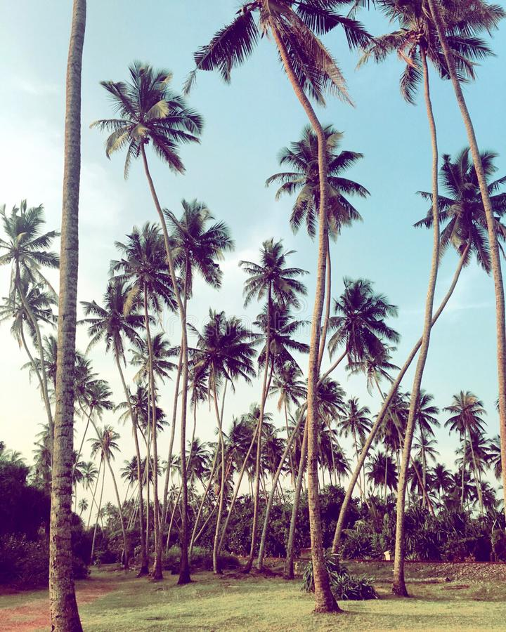 Tropisch Landschap stock foto's