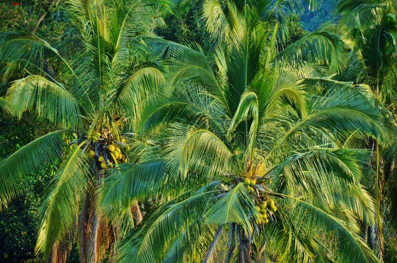Tropisch Landschap royalty-vrije stock foto's