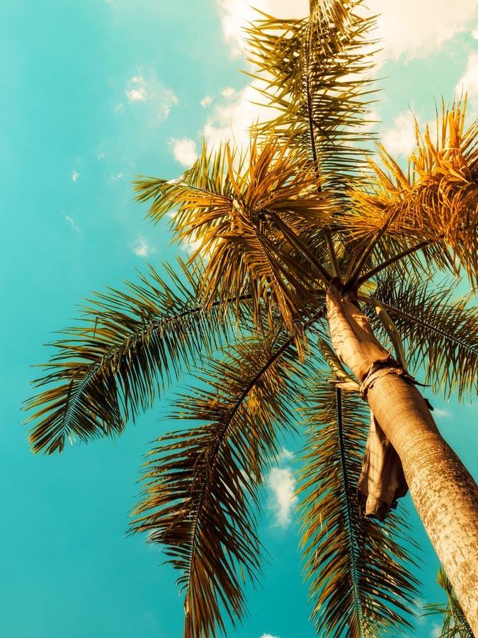 Tropisch Landschap Gestemde wijnoogst Ondiepe diepte van gebied zonlicht royalty-vrije stock foto's
