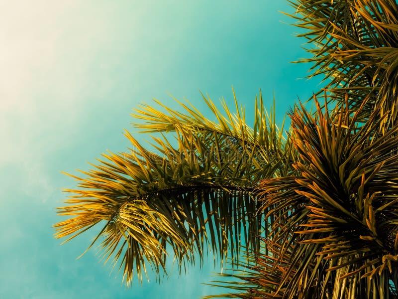 Tropisch Landschap Gestemde wijnoogst Ondiepe diepte van gebied zonlicht royalty-vrije stock afbeeldingen