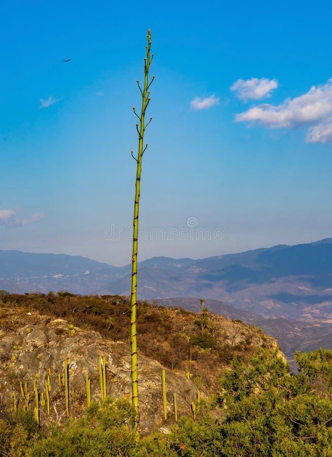Tropisch landschap in Hierve Gr Agua royalty-vrije stock fotografie