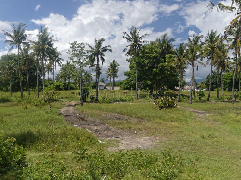 Tropisch landschap op Gili Air, Indionesia stock afbeelding