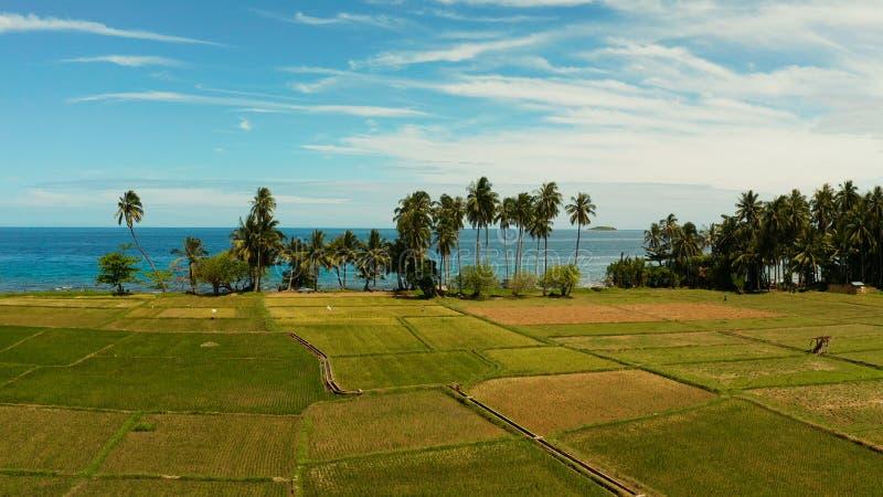 Tropisch landschap, padievelden en het overzees Camiguin, Filippijnen royalty-vrije stock fotografie