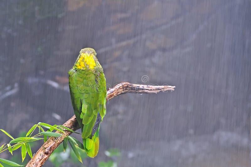 Tropisch onweer. royalty-vrije stock fotografie