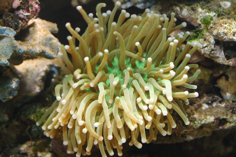 Tropisch overzees koraal royalty-vrije stock afbeeldingen
