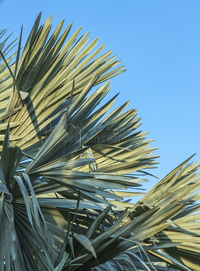 Tropisch palmblad, een abstracte streep van aardachtergrond, natuurlijk patroon royalty-vrije stock fotografie