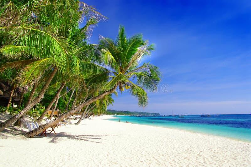 Tropisch paradijs stock foto