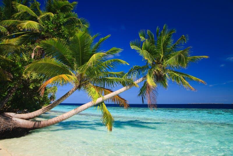 Tropisch Paradijs in de Maldiven royalty-vrije stock afbeelding