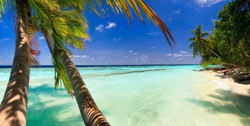 Tropisch Paradijs in de Maldiven stock fotografie