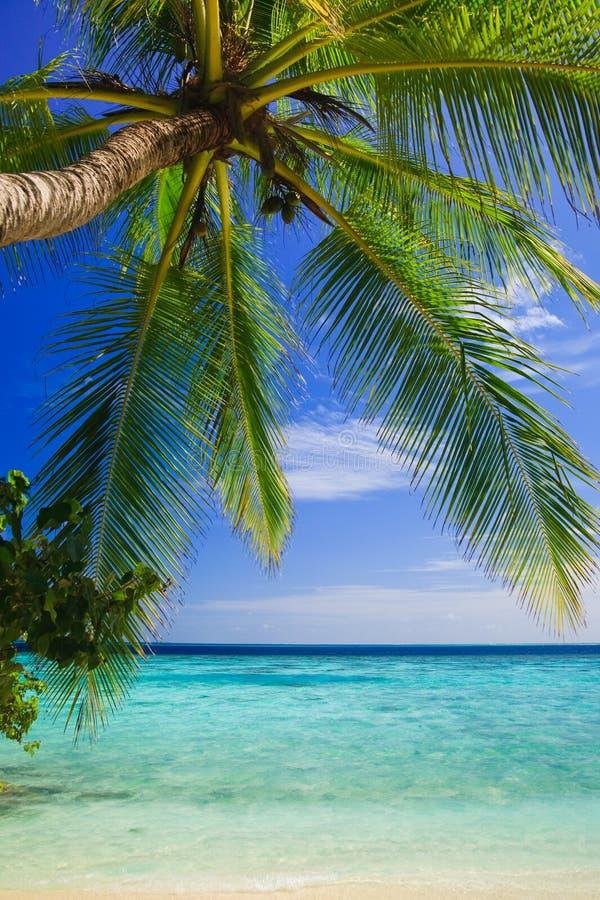 Tropisch Paradijs in de Maldiven stock foto