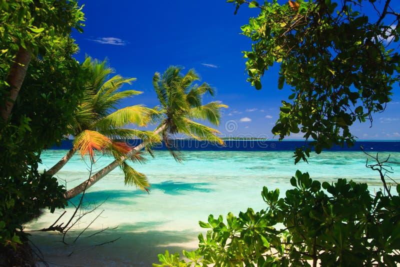 Tropisch Paradijs in de Maldiven stock foto's
