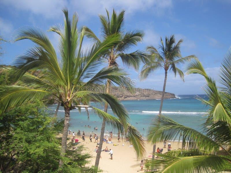 Tropisch paradijsstrand (Hawaï) royalty-vrije stock afbeelding