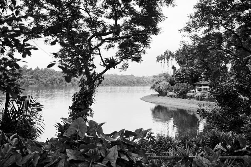 Tropisch regenwoud stock afbeeldingen