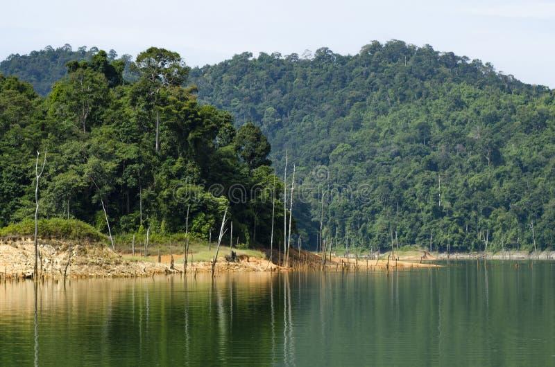 Tropisch regenwoudlandschap van het Koninklijke die Belum-Park van de Staat in Perak, Maleisië wordt gevestigd royalty-vrije stock fotografie