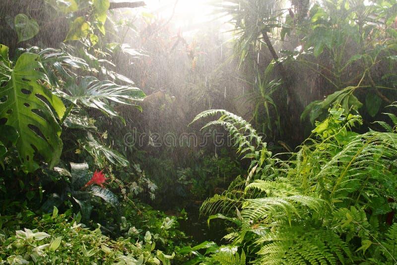 tropisch regenwoudwater   stock foto's