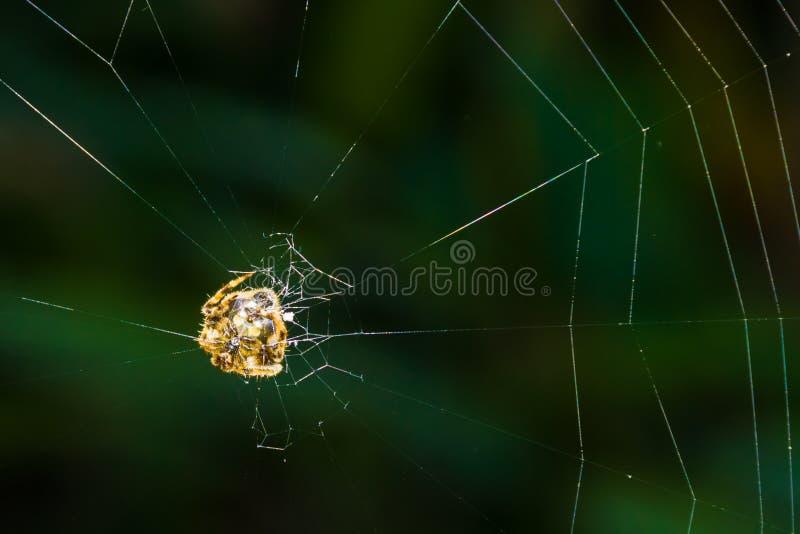 Tropisch spinneweb stock foto