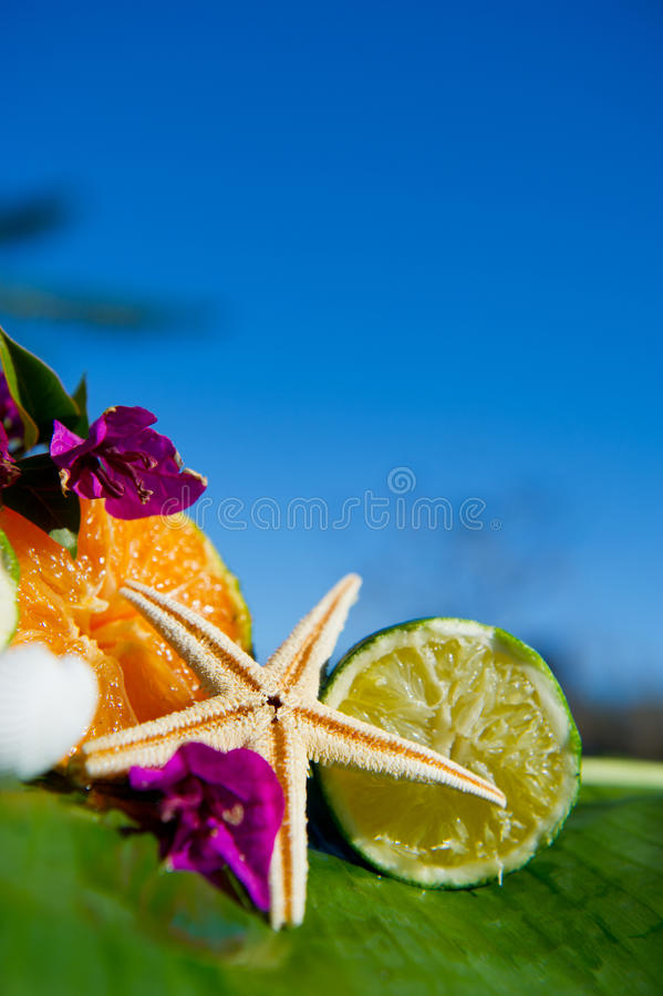 Tropisch stilleven stock afbeelding