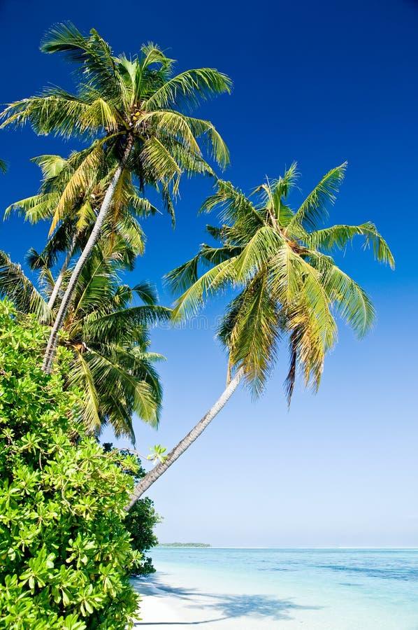 Tropisch strand stock fotografie