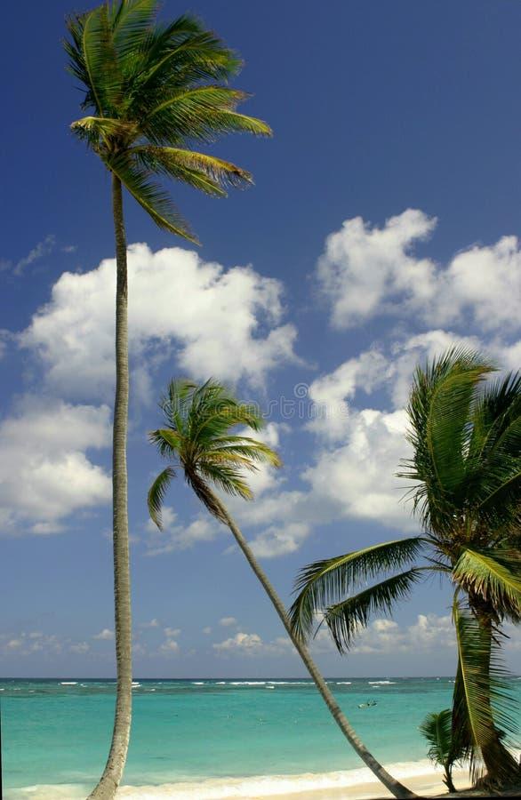 Tropisch strand royalty-vrije stock foto