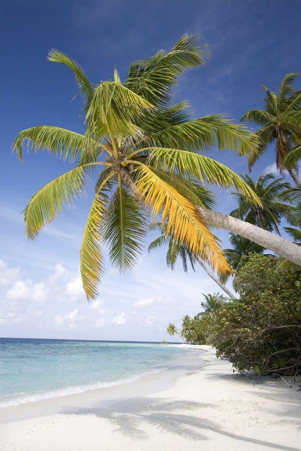 Tropisch strand, de Maldiven stock afbeeldingen